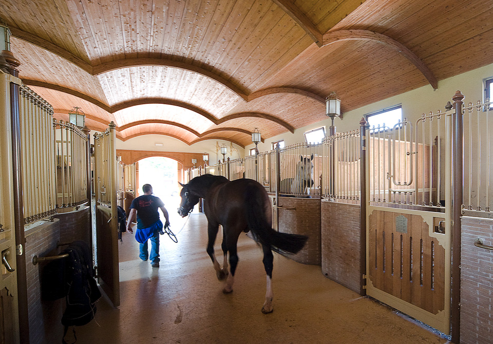 Borgo La Caccia Horses