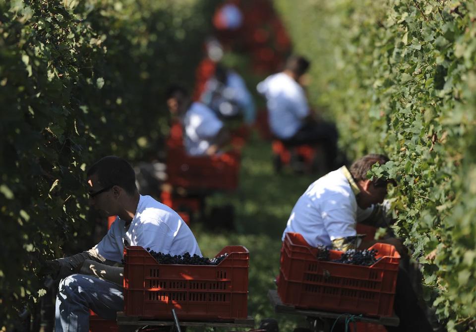 Borgo La Caccia Wine